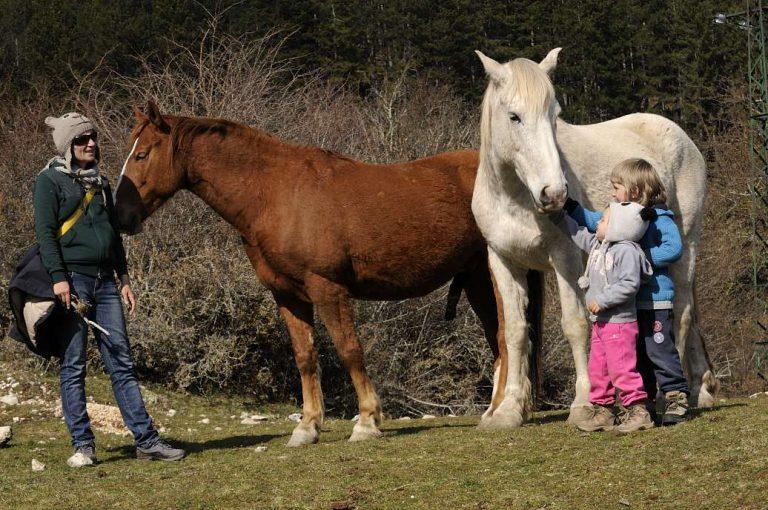 Cavalli a Pescasseroli