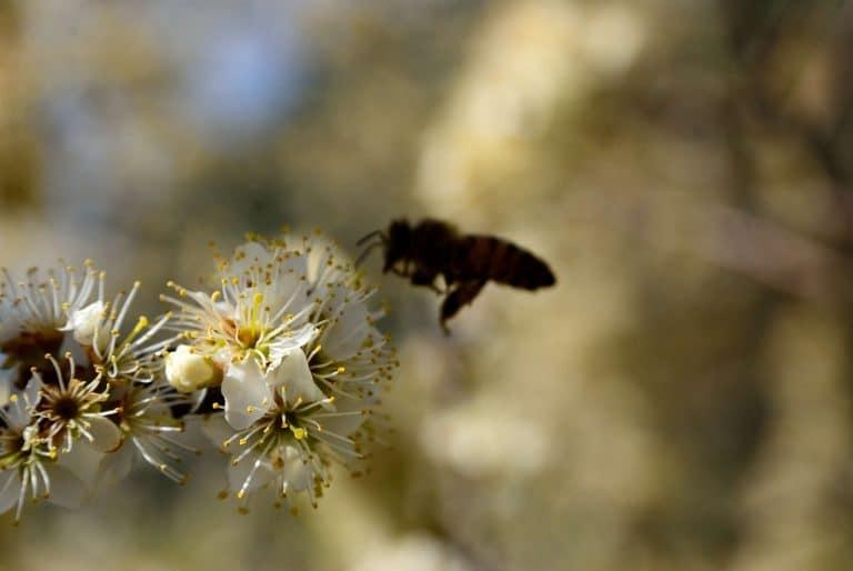 Ecosostenibilità a Pesasseroli nel Parco d'Abruzzo
